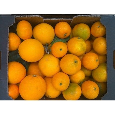 Mix Lane Late-Late mandarine 10 Kg